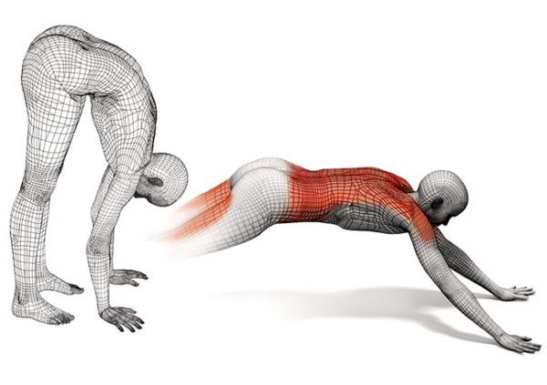 tipuri de activitate musculara_1.jpg